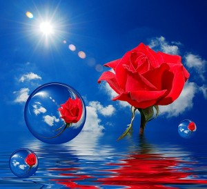 A rose on water with sky in the background