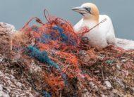 Bird sat with Plastic